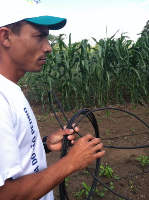 Flor with one of the irrigation hoses