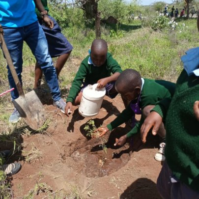 Tree Planting at Illaimiror primary school