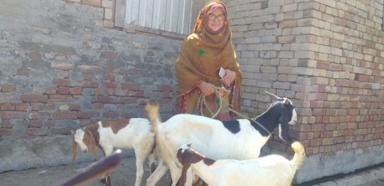 one beneficiary having her own livestock