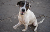 Give +10k dogs&cats in Venezuela a second chance