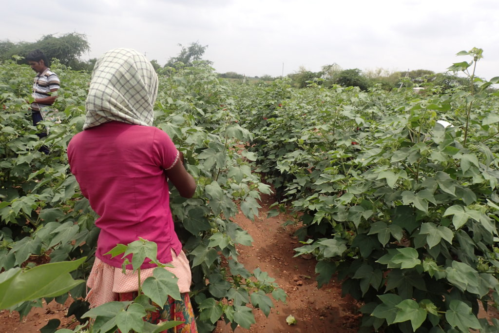 Girl working in cotton field