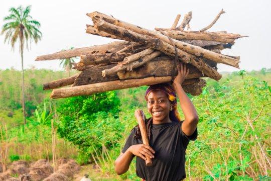 Sustainable Mangrove Harvesting