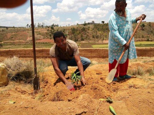 Planting Fruit Trees at NY DINA in Madagascar