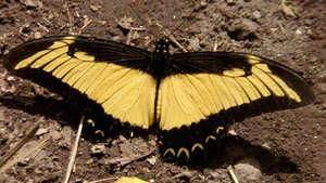 Butterfly sunning