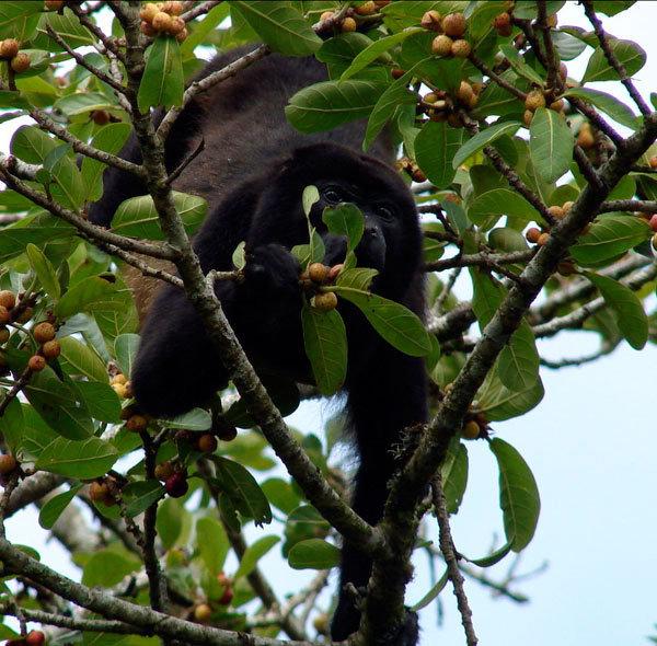 Increasing Tenorio Volcano Forest, Costa Rica