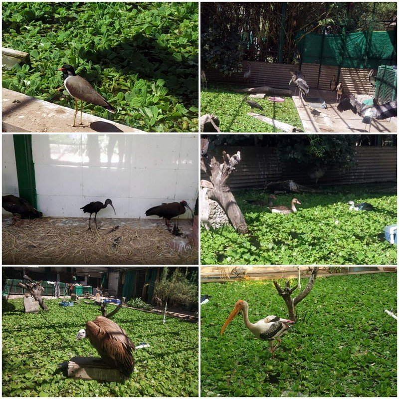 BIRDS IN OUR AVAIRY