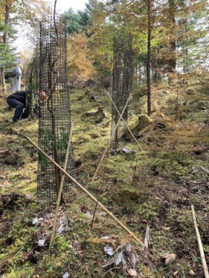 Re-installed nets supported with bamboo sticks