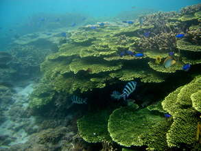 Coral Reef in Taiwan
