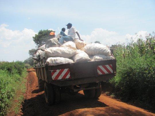 Taking the harvest for shelling