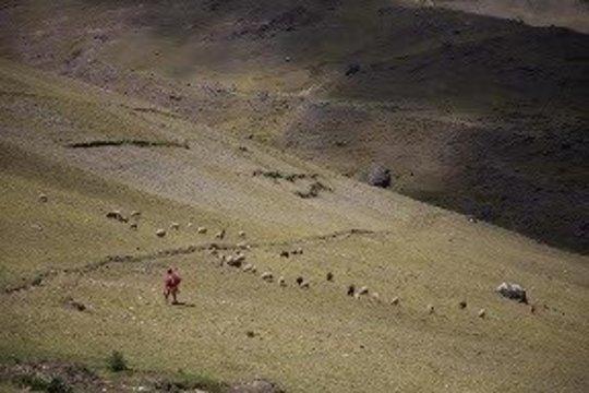 A weaver tends her sheep in Patacancha