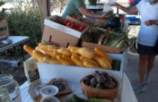 Help Increase Food Access and Security in Rural NC