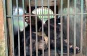 Help End the Illegal Wildlife Trade in Vietnam
