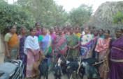 Goats for Tamil Nadu Cyclone Nivar recovery