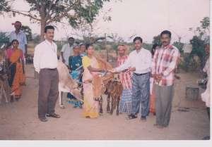 providing cow