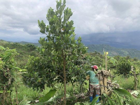 Developing a demo farm