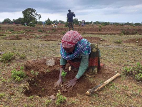 Fieldwork in Desa'a