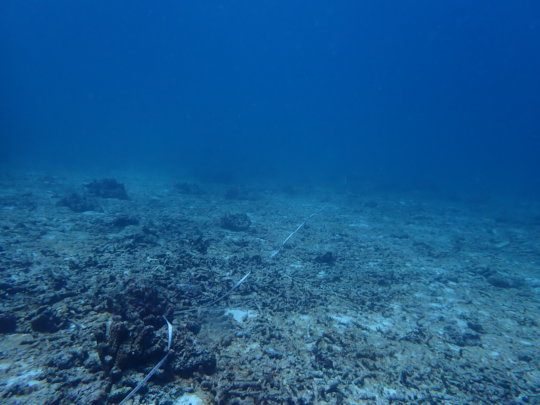 Coral reef decimated by bleaching