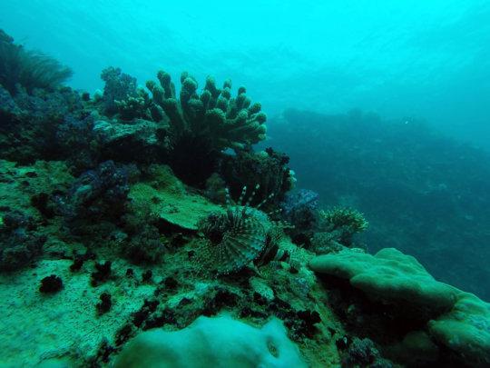 Seychelles reefs