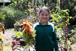 Harvested veggies used for school meals