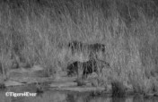 Water for Bandhavgarh's Tigers - Urgent Repairs