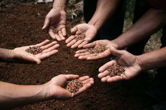 We support the cultivation of native seeds