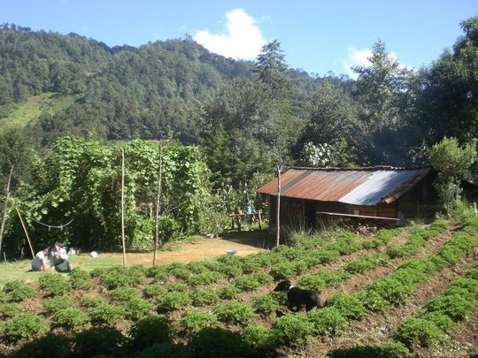 We promote a comprehensive farm model