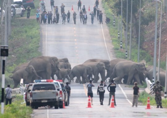 Saving Odisha Elephants from Traffic Deaths