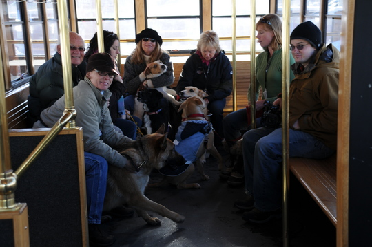Canines on the trolley