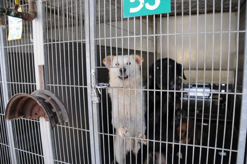 the smiling shelter dog