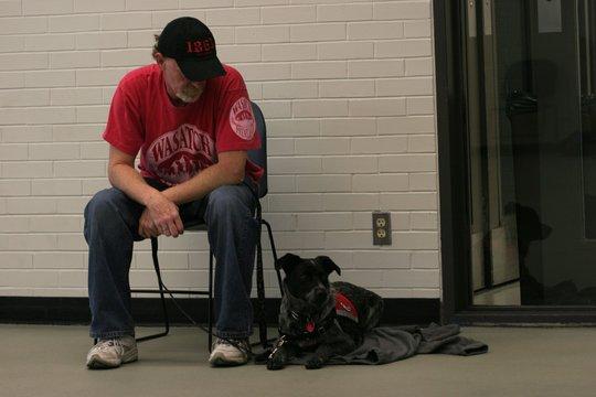 Veteran training dog