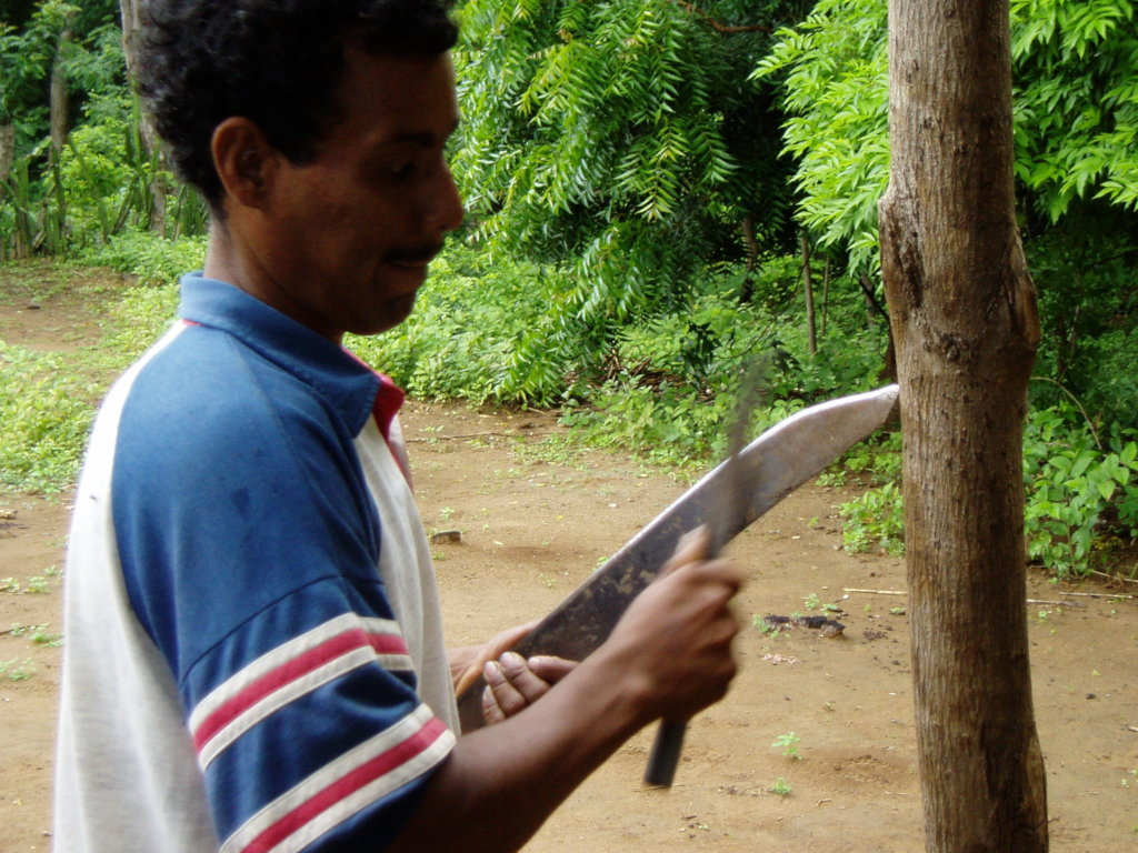 The machete is an essential forestry tool