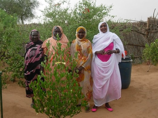 Four Ladies by a New Tree