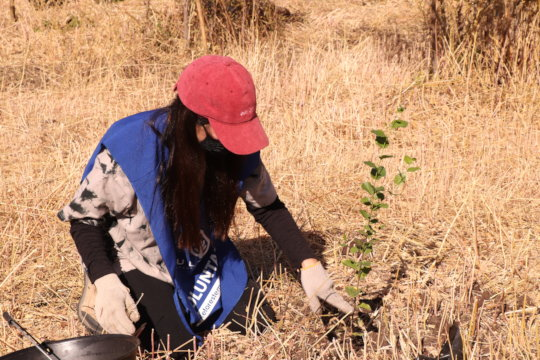 Let's plant 3000 trees in a new park for Santiago