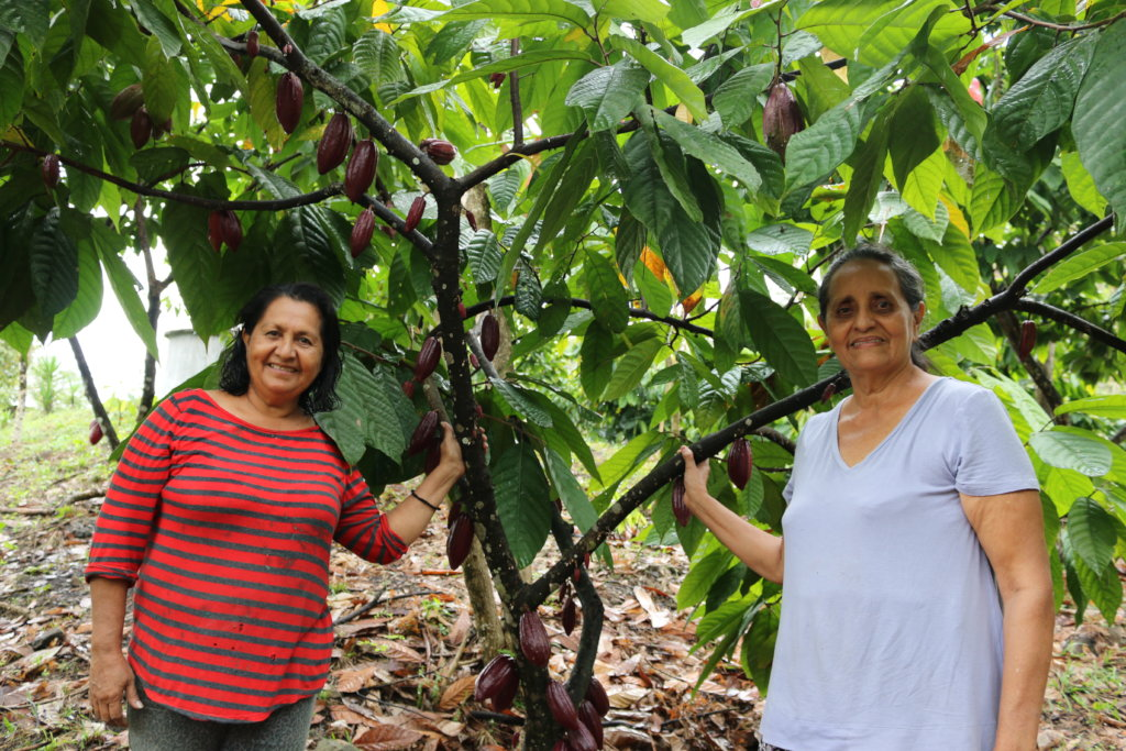 Agro-Forestry Project for Indigenous of Honduras