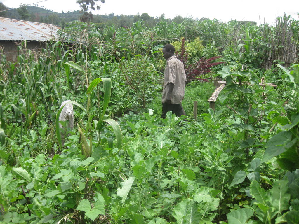 NECOFA  initiated a programme aimed at enhancing Food and Nutrition security for households   affected by HIV/AIDS in Molo district in recognition of the fact that the right to quality food is human basic right. In the year 2010, 90 families with 450 members benefited from the program.