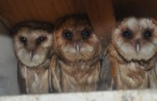 Wild bird rescue centers in Bosnia and Herzegovina