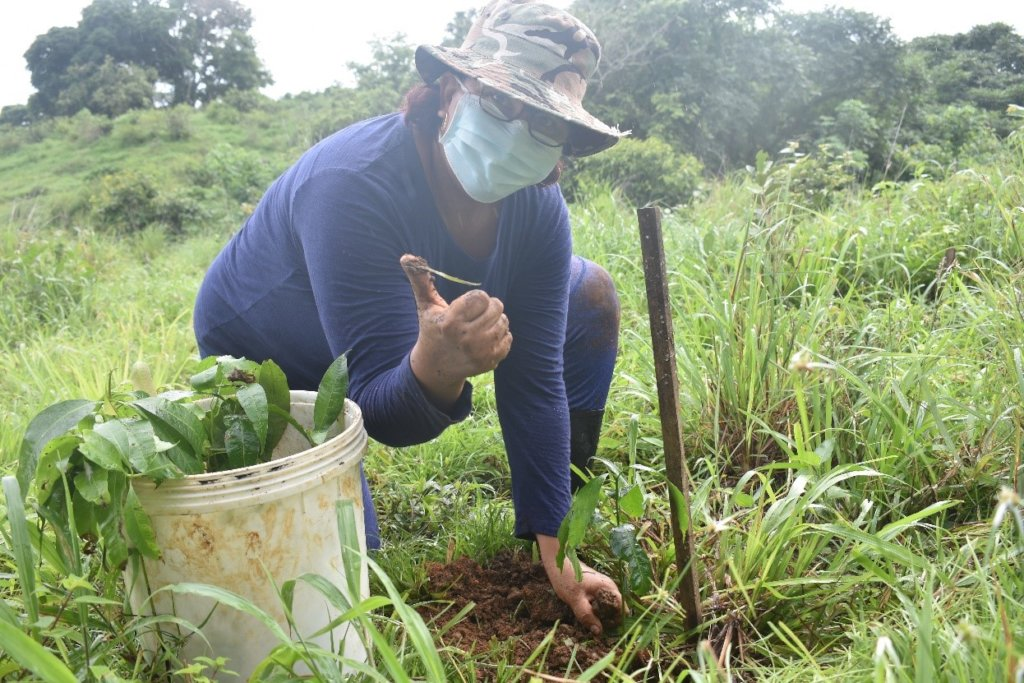 Local community member reforesting