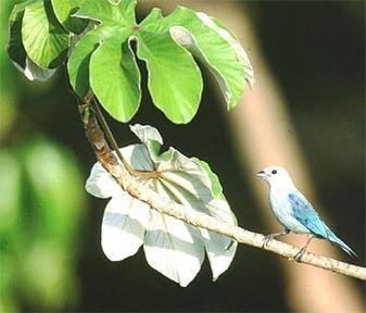Adopt Oak Forest in the Tropical Andes