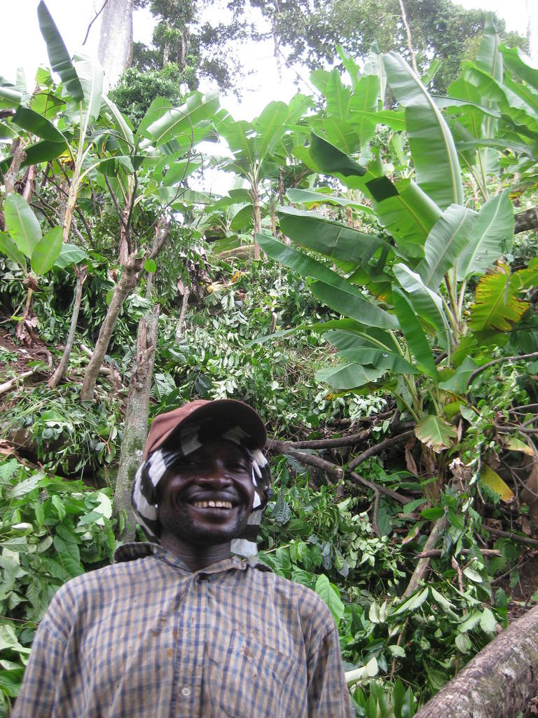 Our photo is that of our project leader George Abang Tawoh wearing a nylon back on his head with fainted brown faced cap to enable him protect mosquitoes and a long sleeve shirt in part of the plantains farm between plantains trees facing the down section of the farm towards the ocean.