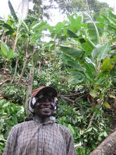 George among the plantain trees