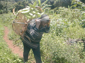 Carrying the crop to market