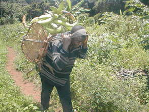 Transporting Plantain Crop on Foot