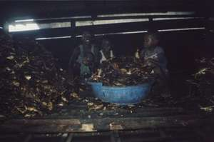 Children working in fish smoking factory