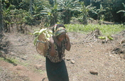Grow plantains & support human rights in Cameroon!