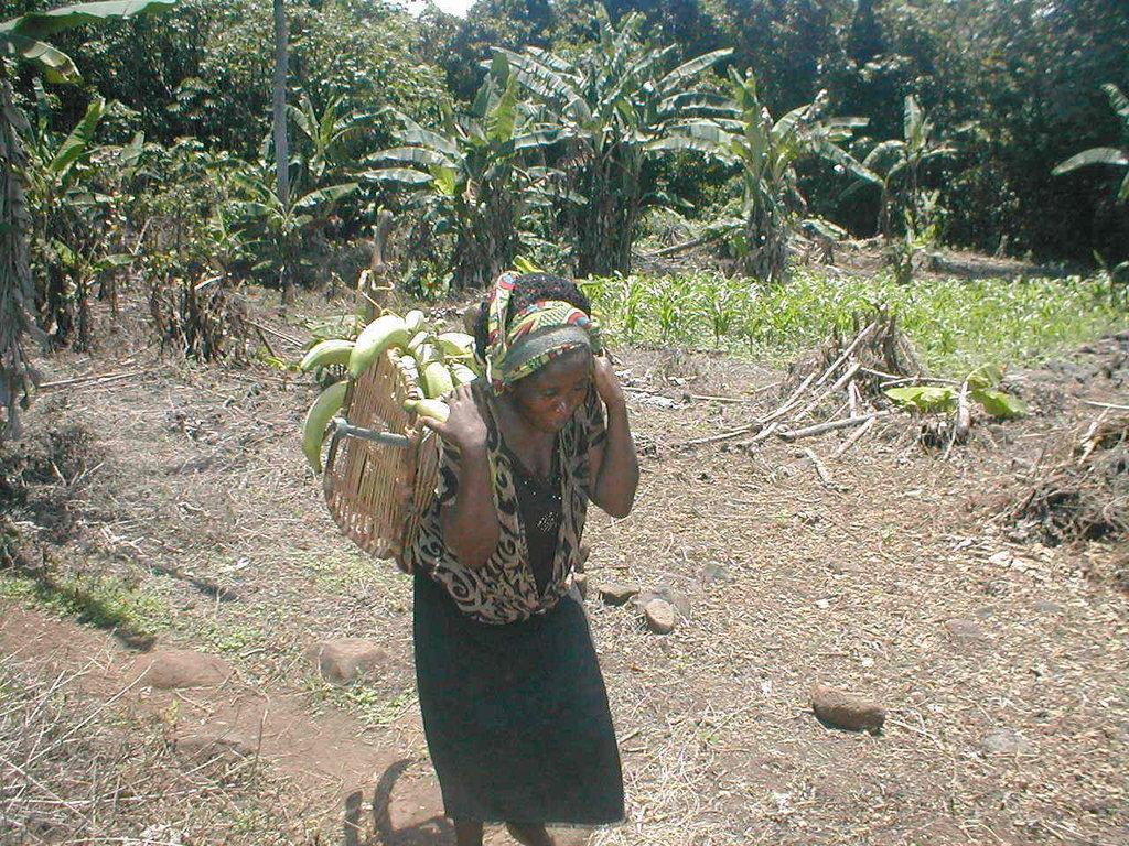 One of the picture that is in our project home page with a APWCR volunteer Pascaline transporting plantains using a traditional wave carrier using but her back