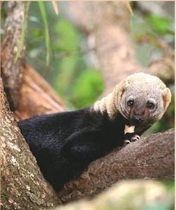 Save El Salvador's Last Expanse of Rainforest