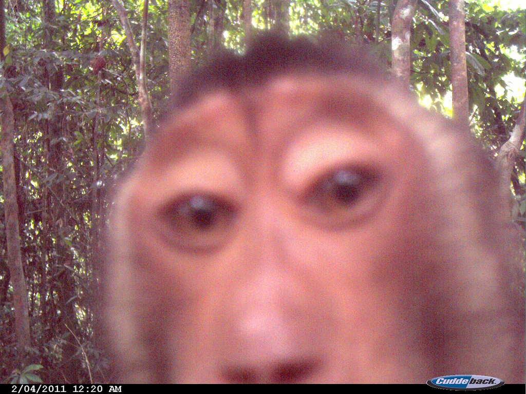 Curious macaque