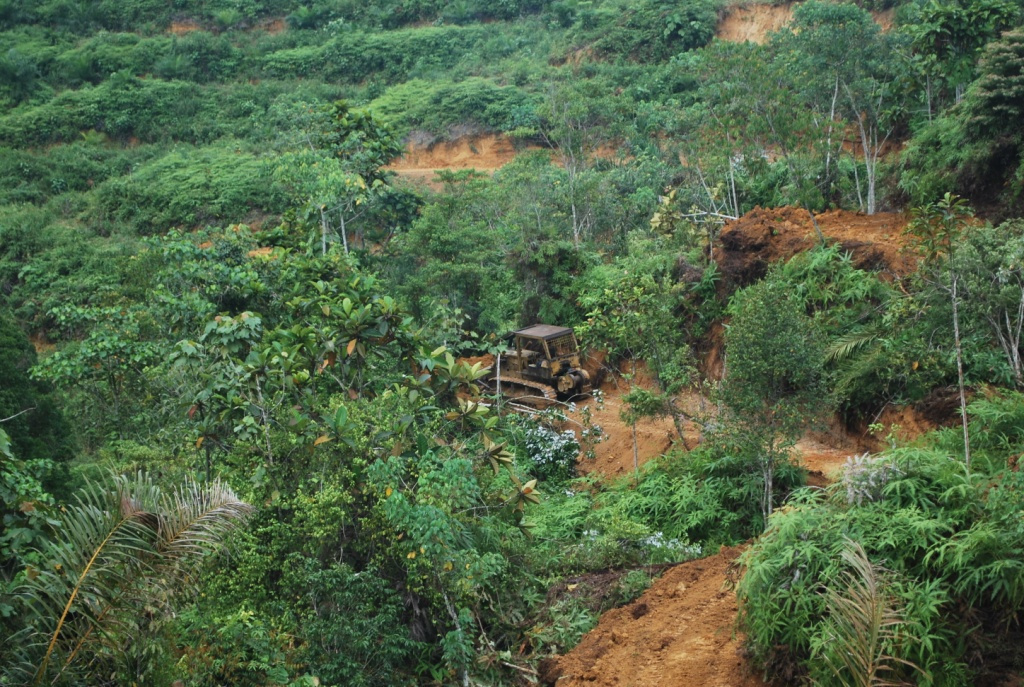 Bulldozers clearing the land for oil palm planting