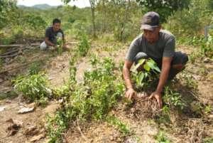 Maintaining humidity around saplings