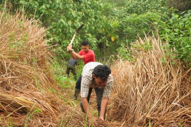 Manual weeding